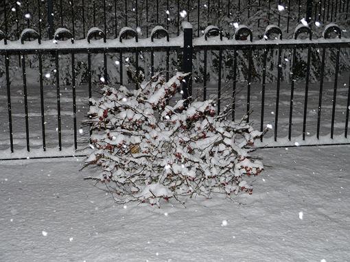 Снег в феврале 2012 года, Бирмингем