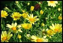 01d-flowers