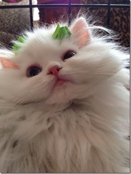 funny-animals-cute-039