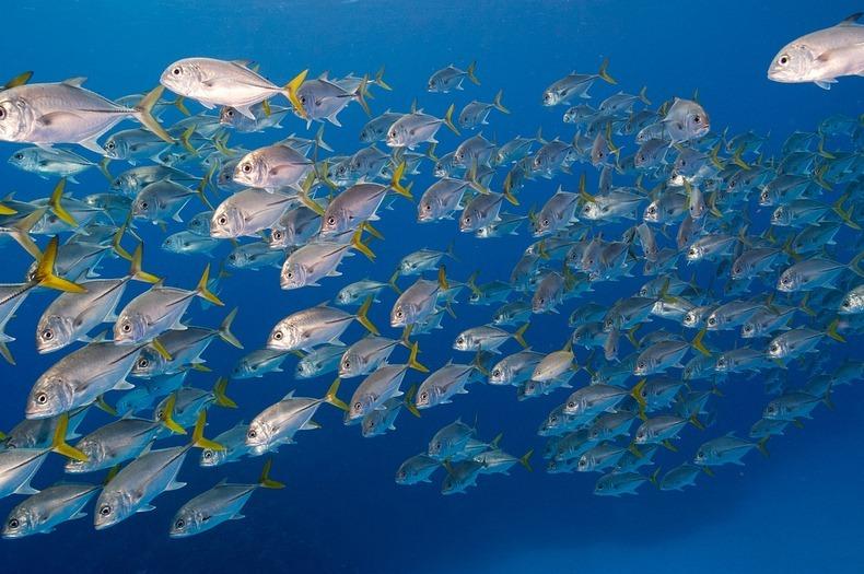 cayman-island-shipwreck-1
