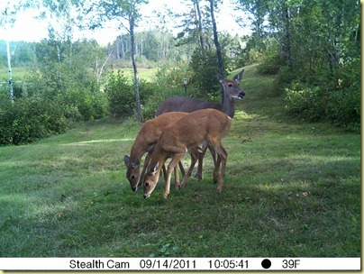 Sept 14 Little Doe with Spottie and Dottie-1