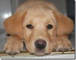 Continúa el programa de esterilizaciones quirúrgicas gratuitas para caninos