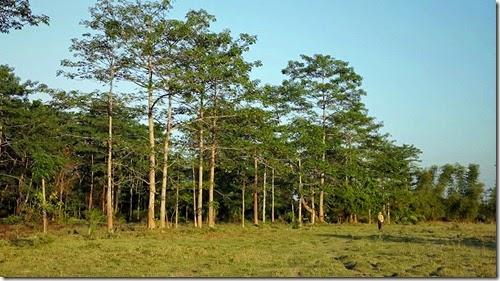 ecologia, cultura, medio ambiente, arboles, vida