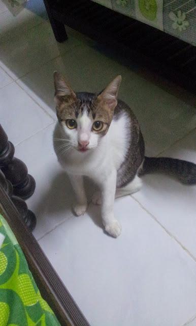 Cerita Yna Kucing Di Kampung