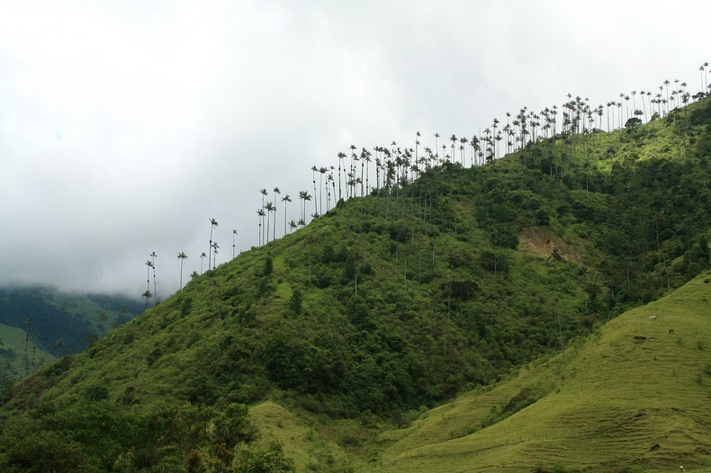 cocora-valley-8