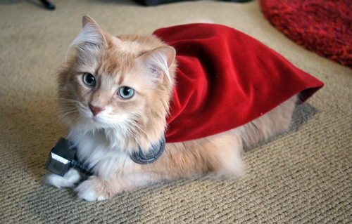 Kitty Thor via sparkysmachine