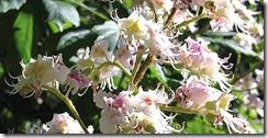flor-castano