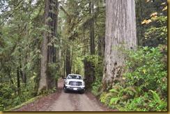 Redwoods TRK 1a