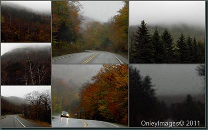 fog collage1020