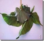 Folha natural para usar como molde