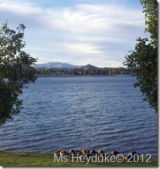 Sparks Marina Lake Geese