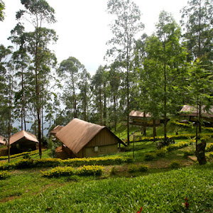Nature Zone Resort