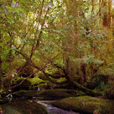 The Walk to Oparara Arch - Karamea, New Zealand