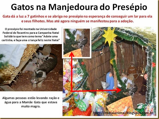 Gatos na Manjedoura do Presépio