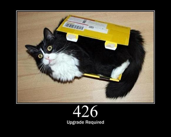 HTTP-Status-Cats-19