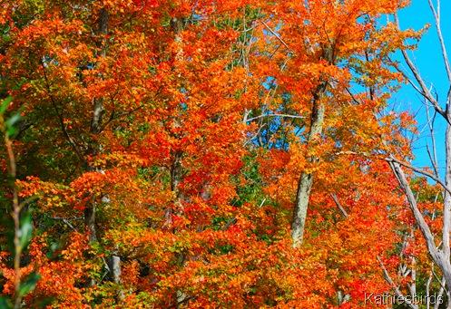 14. autumn blaze-kab