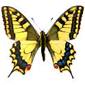 Atlas of Czech Butterflies icon