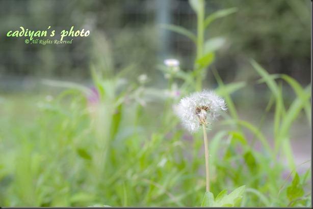 D700_2012-07-15_000