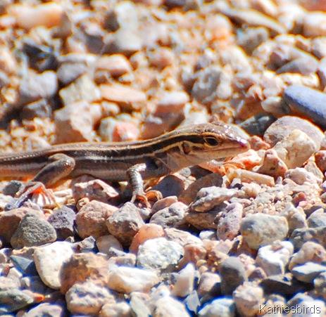 7. lizard-kab