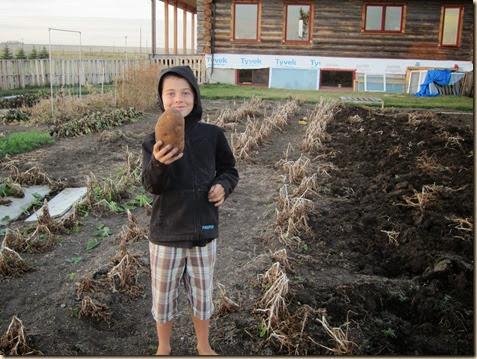 Harvest 158