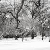 Winter at Boston Public Garden