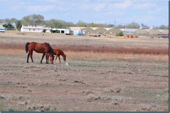 05-09-13 horses 02