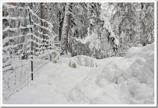 121223_snow_053