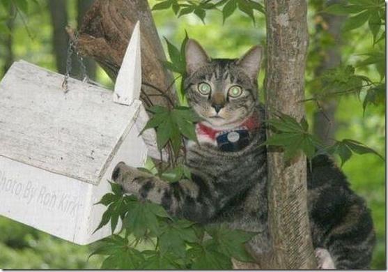 gato pajaritos 1