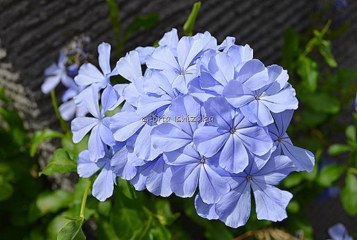 Azul - Glória Ishizaka 32