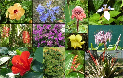 Hawaii Flowers Collage