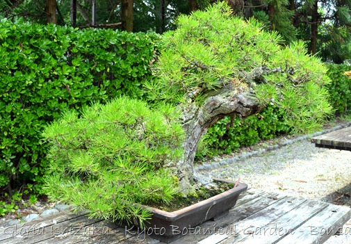 Glória Ishizaka -   Kyoto Botanical Garden 2012 - 52