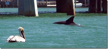 2012-02-23 Lake Manatee State Park FL 024