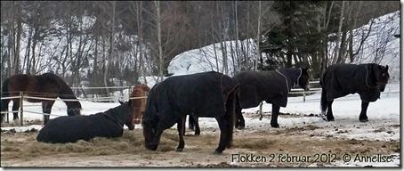 2012_flokken-2feb_01