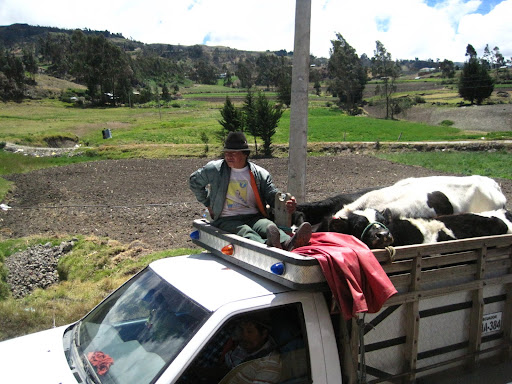 A typical scene on the country roads of Ecuador