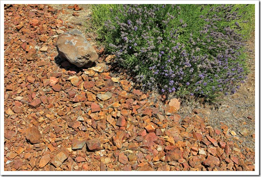 120720_mt_shasta_lavender_farm_037