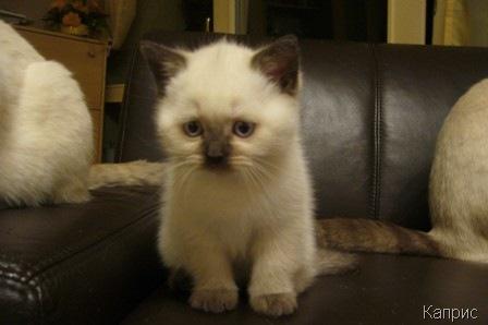 Наконец-то у нас родились котята