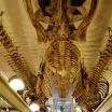 skeleton of animals