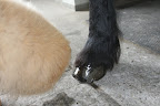 Wow!  Rinze's hooves are so shiny.