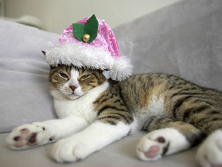 Boring-Christmas-l