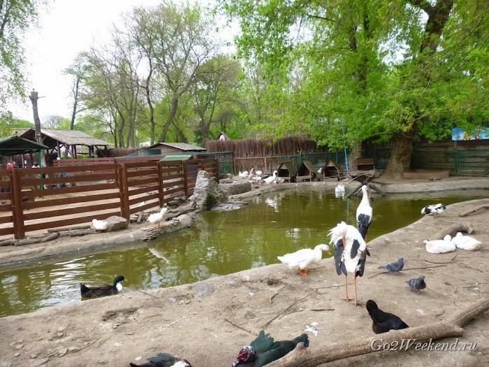 Kiev_Zoo_25.jpg