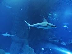 2015.01.25-026 requin