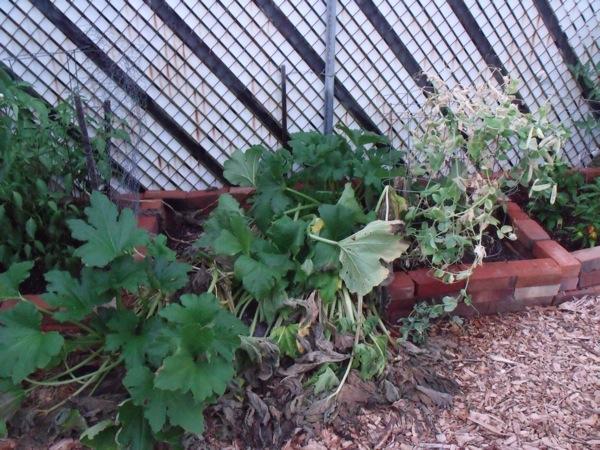 20120709 garden 010