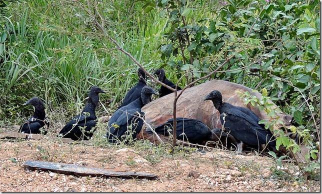 Pantanal_DSC08664