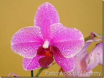 orquídea 006