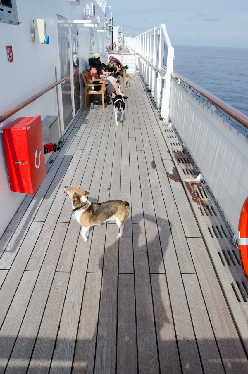 QM2 deck with dogs