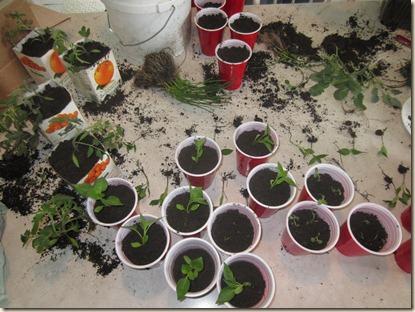 potting plants 061