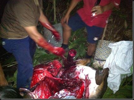 Darah yang terkumpul dimasukkan ke dalam buluh (berdekatan dengan kaki)