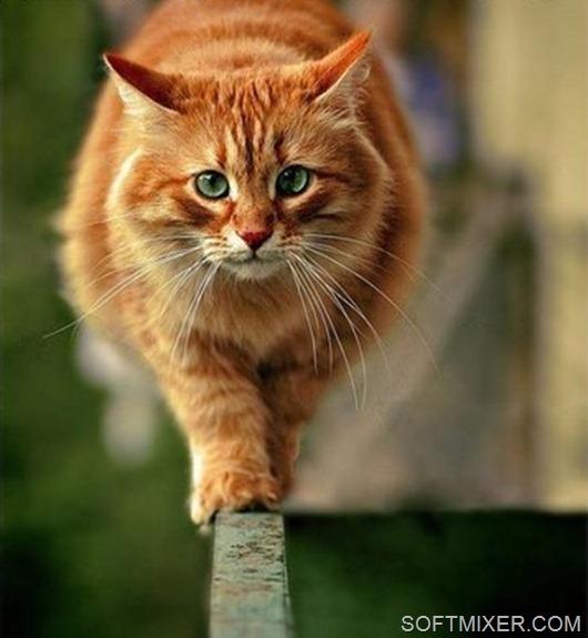 Кот-идет-к-цели