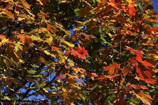 natur_20111013_oktoberblad