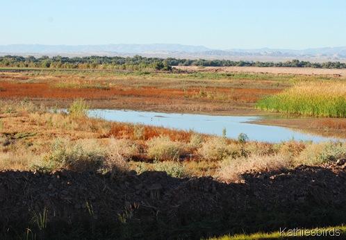 4. marshland-kab